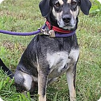 Adopt A Pet :: Bandit - Wytheville, VA