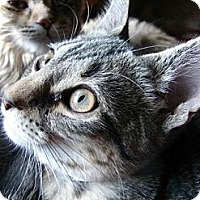 Adopt A Pet :: Cindy Lou - Grand Rapids, MI