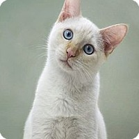 Adopt A Pet :: Devin - Phoenix, AZ