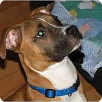 Adopt A Pet :: Riza - Rigaud, QC
