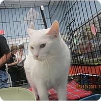 Adopt A Pet :: Pink - Sterling Hgts, MI