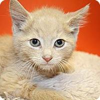 Adopt A Pet :: SHERLOCK - SILVER SPRING, MD