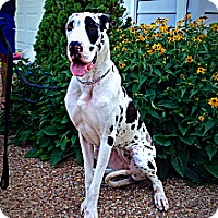 Adopt A Pet :: Allie - Virginia Beach, VA