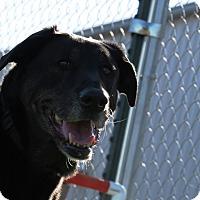 Adopt A Pet :: Nikki - Meridian, ID