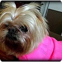 Adopt A Pet :: PHOEBE in Fillmore, MO. - Seymour, MO