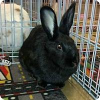 Adopt A Pet :: Eclipse - Williston, FL