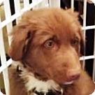 Adopt A Pet :: Super Pup Wolverine
