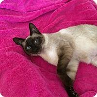 Adopt A Pet :: Jewell - Burbank, CA
