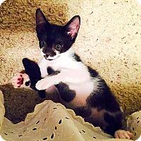 Adopt A Pet :: Willy - Scottsdale, AZ