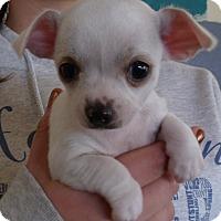 Adopt A Pet :: MOUSE PUPS A - Corona, CA