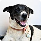 Adopt A Pet :: Orca & Maya