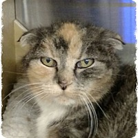 Adopt A Pet :: Scarlet - Pueblo West, CO