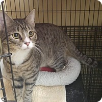 Adopt A Pet :: Chester - East Meadow, NY