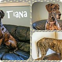 Adopt A Pet :: Tiana - DOVER, OH