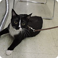Adopt A Pet :: Travis - MARENGO, IL