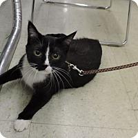 Adopt A Pet :: Travis - MARENGO, IL