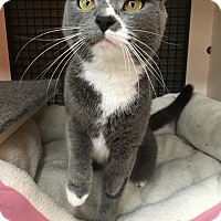 Adopt A Pet :: Jasmine (SC) - Little Falls, NJ