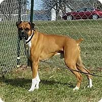 Adopt A Pet :: Chance - Woodbury, MN