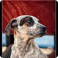 Adopt A Pet :: Ford - Wickenburg, AZ