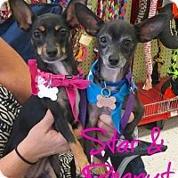 Adopt A Pet :: Star and Peanut - Scottsdale, AZ