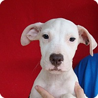 Adopt A Pet :: Galaxy - Oviedo, FL