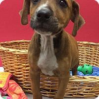 Adopt A Pet :: Mellow - Decatur, AL