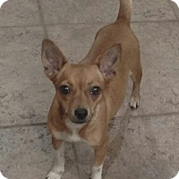 Adopt A Pet :: Bambi - Mary Esther, FL
