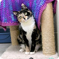 Calico Cat for adoption in Stamford, Connecticut - MISCESU