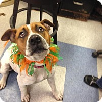 Adopt A Pet :: Mack - Saginaw, MI