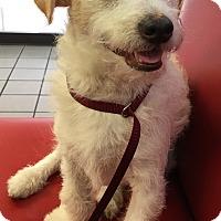 Adopt A Pet :: Barney - Los Angeles, CA