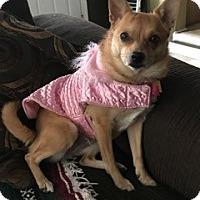 Adopt A Pet :: Cate - St Clair Shores, MI