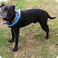 Adopt A Pet :: MOON - Houston, TX