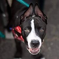 Adopt A Pet :: Fievel - Lompoc, CA