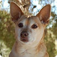 Adopt A Pet :: Erika - Las Vegas, NV