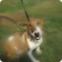 Adopt A Pet :: Dakota - Zaleski, OH