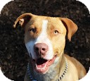 Terrier (Unknown Type, Medium) Mix Dog for adoption in Tinton Falls, New Jersey - Randal
