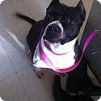Adopt A Pet :: Anthea - Chicagoland area, IL