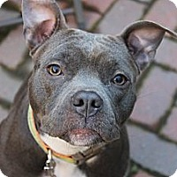 Adopt A Pet :: Rudy - Reisterstown, MD