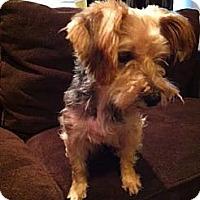 Adopt A Pet :: Minute - Puyallup, WA
