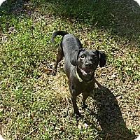 Adopt A Pet :: Diva - Eden, NC
