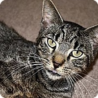 Adopt A Pet :: Johnny - Xenia, OH