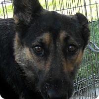 Adopt A Pet :: Isabelle - Oakley, CA