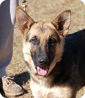 Bristol Ct Dog Rescue