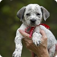 Adopt A Pet :: Seager - Groton, MA