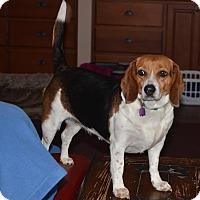 Adopt A Pet :: Bubbles - Bedminster, NJ