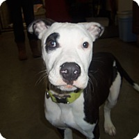 Adopt A Pet :: JEWELS - Medford, WI