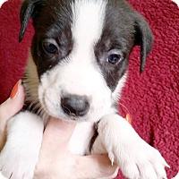 Adopt A Pet :: Jeanie - Cincinnati, OH
