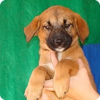 Adopt A Pet :: Rhea - Oviedo, FL