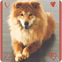 Adopt A Pet :: Bimbi - Miami, FL