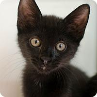Adopt A Pet :: Petunia - Greenwood, SC